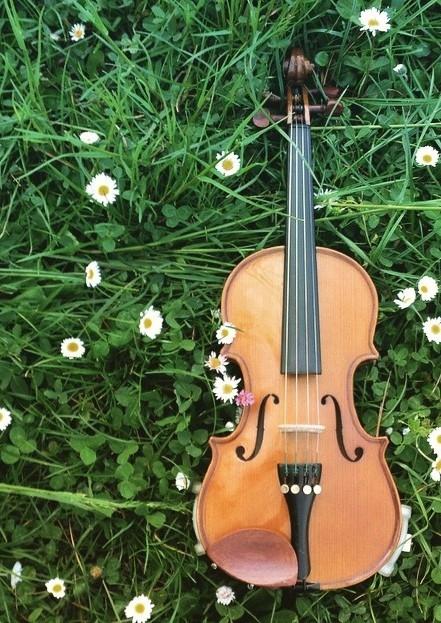 Perepepe - Violino di Viola